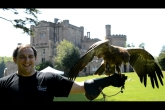 Falconry at Highland Games event at Dalhousie Castle